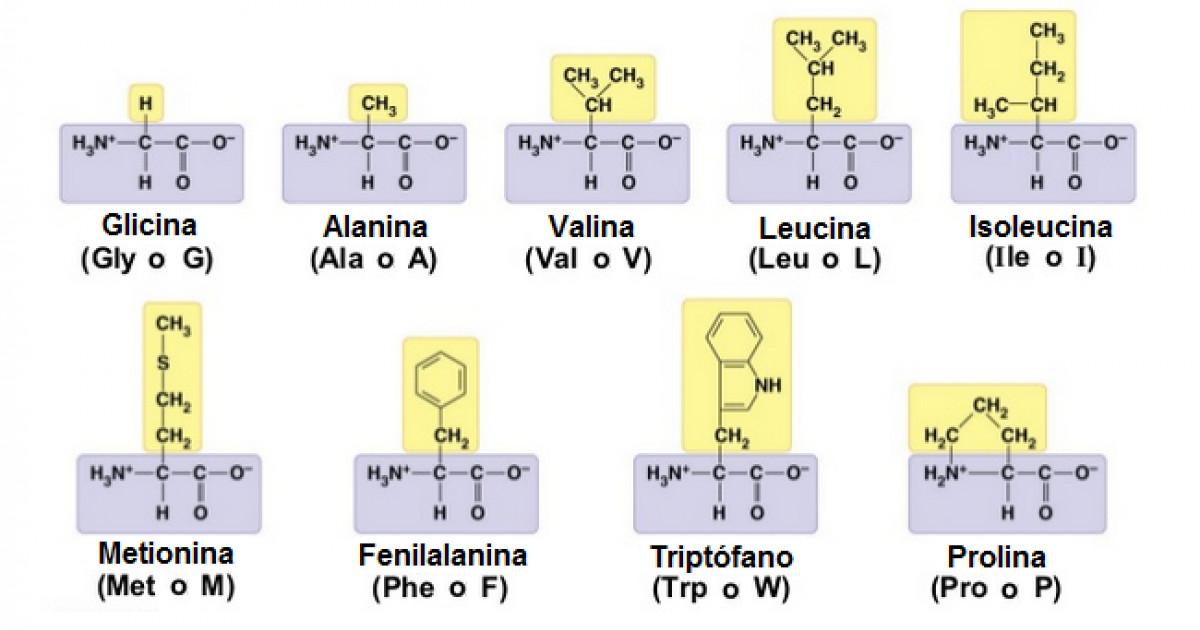 20 formulas quimicas de los amino acidos para bajar de peso
