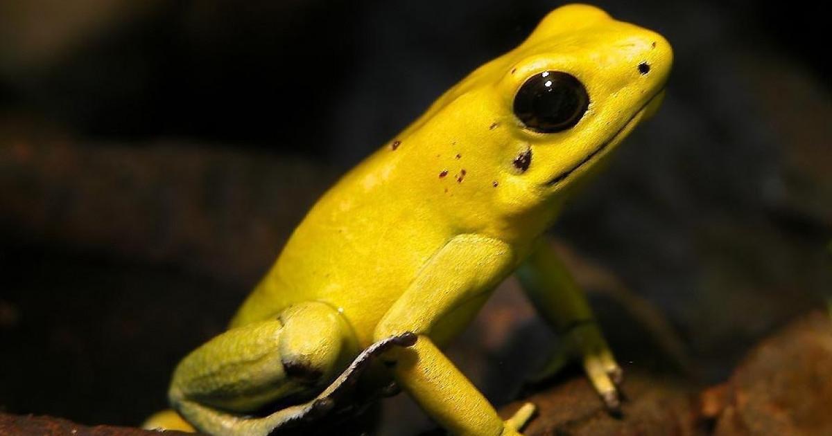 Los 15 animales más venenosos del mundo