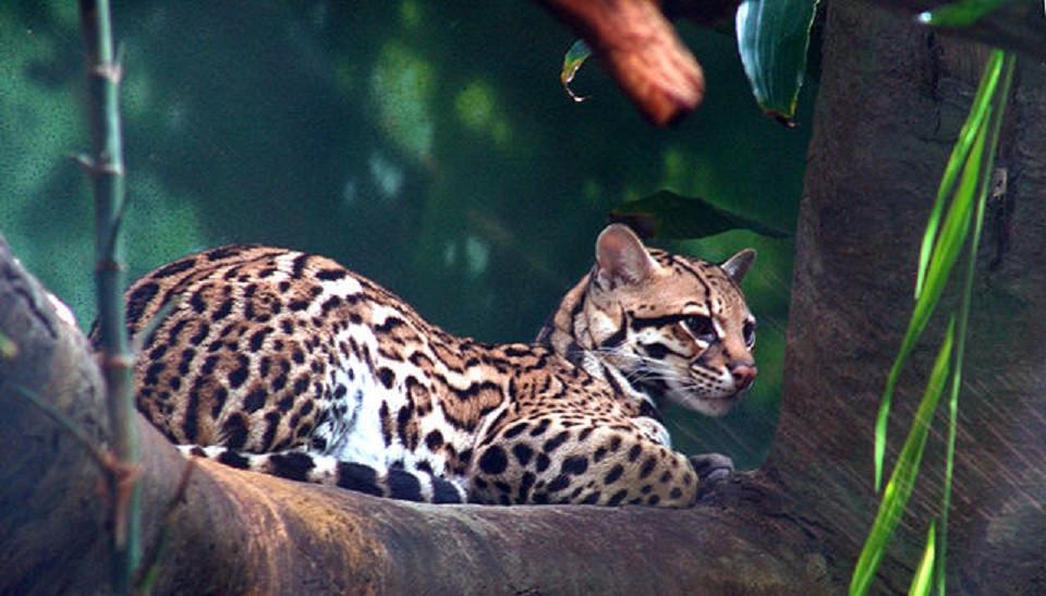 16 animales en peligro de extinción en México