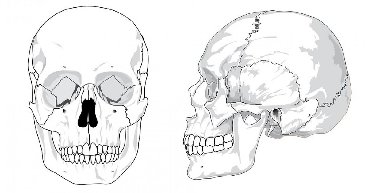 Clases de huesos yahoo dating