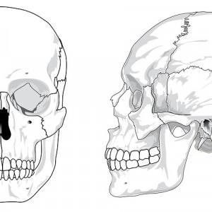 Huesos de la cabeza (cráneo): ¿cuántos hay y cómo se llaman?