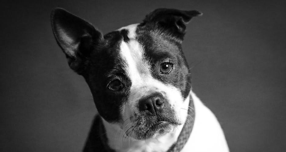 Fobia a los perros (cinofobia): causas, síntomas y tratamiento