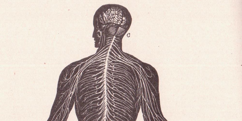 Nociceptores (receptores del dolor): definición y tipos
