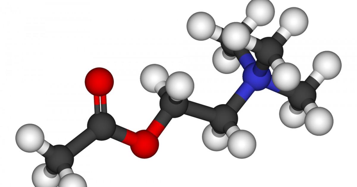 Resultado de imagen para acetilcolina