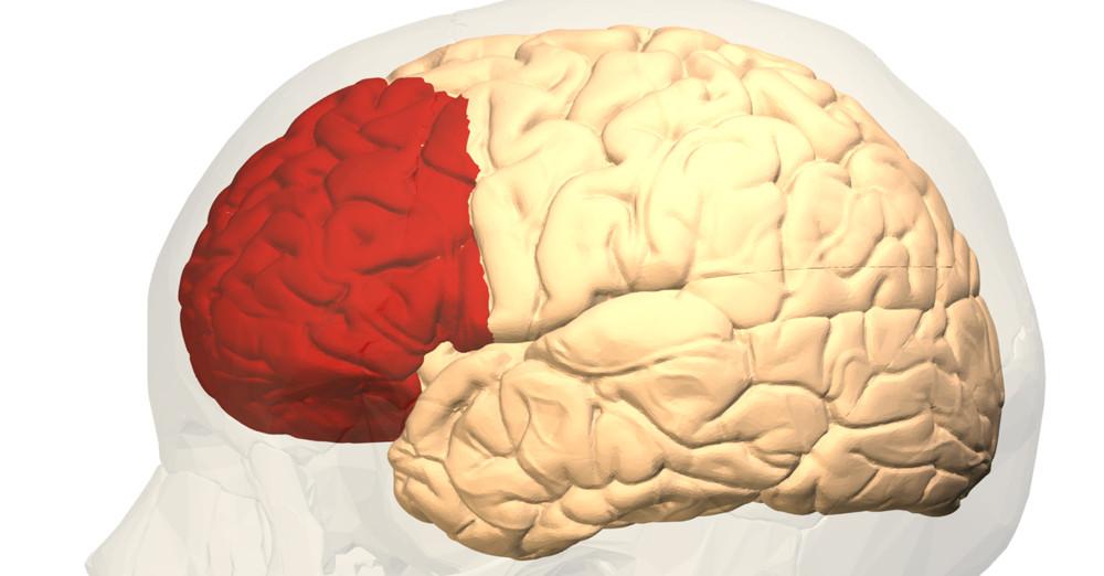 Corteza prefrontal: funciones y trastornos asociados