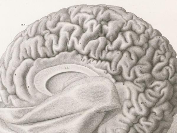 Lista de enfermedades de la cabeza