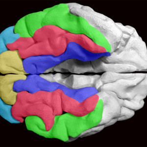Reserva cognitiva: qué es y cómo nos protege de la demencia