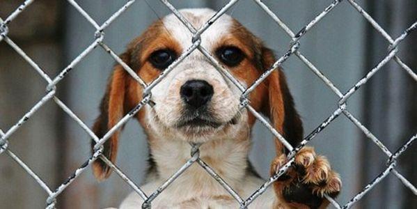 El maltrato animal en menores: ¿cosas de niños?