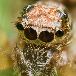 Aracnofobia: causas y síntomas del miedo extremo a las arañas