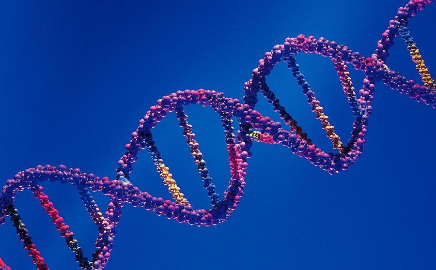 Los 10 principales trastornos y enfermedades genéticos