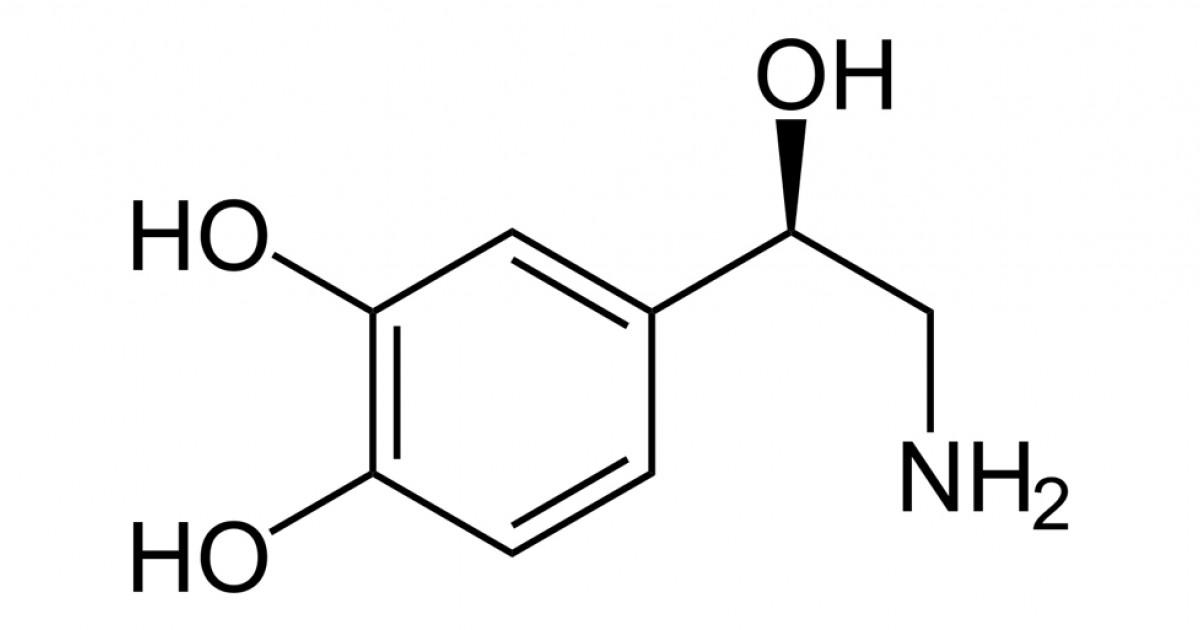 Catecolaminas Tipos Y Funciones De Estos Neurotransmisores