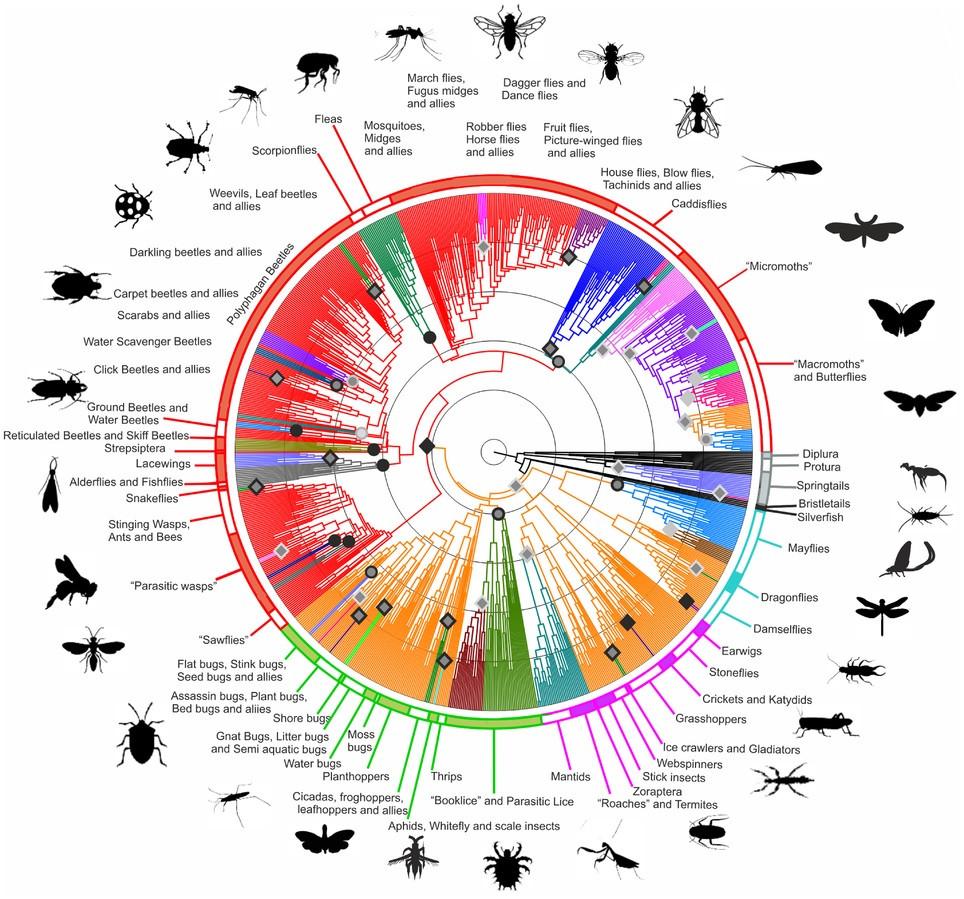 Árbol filogenético