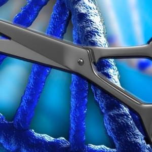 Consiguen corregir una enfermedad genética editando el ADN
