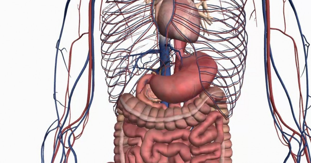 mejorar el sistema nervioso entérico