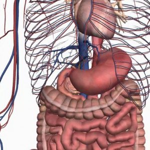 Así es el diálogo químico entre tu cerebro y tu estómago