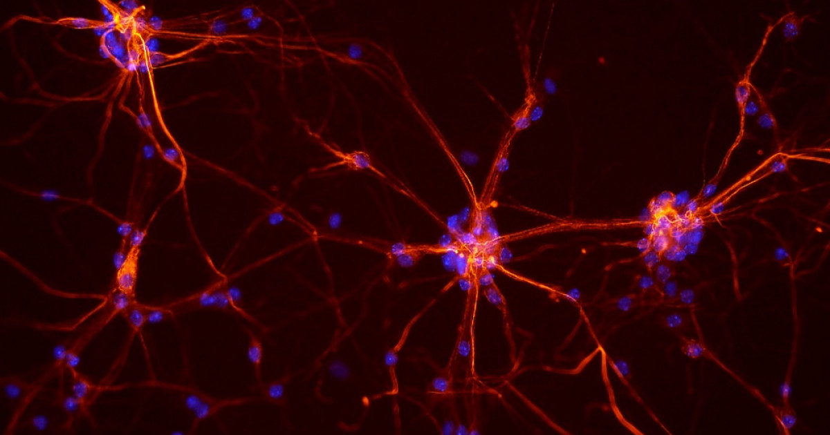 Ley de Hebb: la base neuropsicológica del aprendizaje