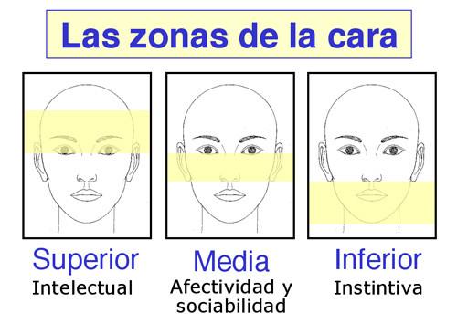 Morfopsicología Los Rasgos Faciales Y La Personalidad