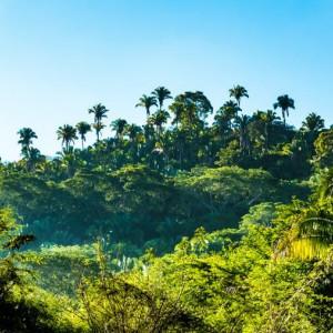 Los 6 tipos de ecosistemas: los diferentes hábitats que encontramos en la Tierra