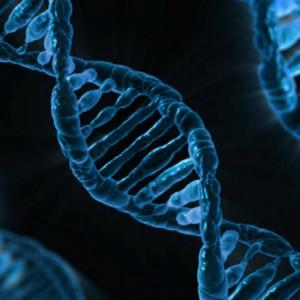 ¿Somos esclavos de nuestros genes?