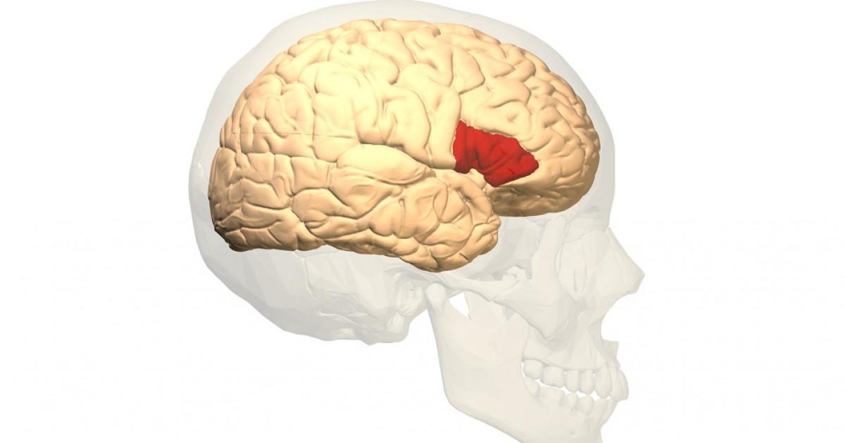 Área de Broca (parte del cerebro): funciones y ubicación