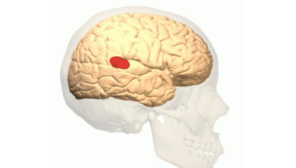 Área de Wernicke: anatomía, funciones y trastornos