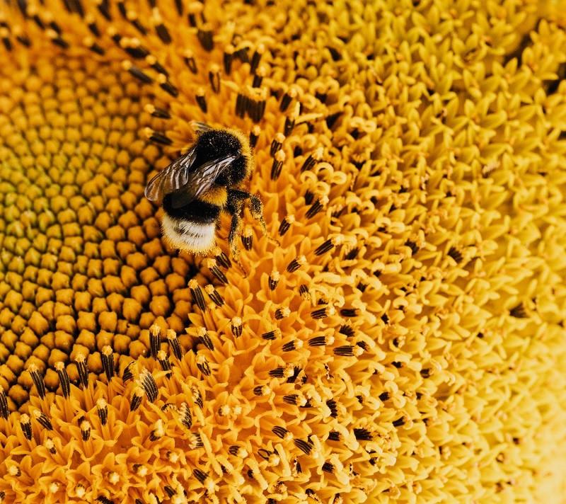 Fobia al amarillo